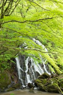 新緑の江竜田の滝の写真素材 [FYI04087068]