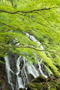 新緑の江竜田の滝の写真素材 [FYI04087069]