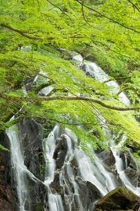 新緑の江竜田の滝の写真素材 [FYI04087070]