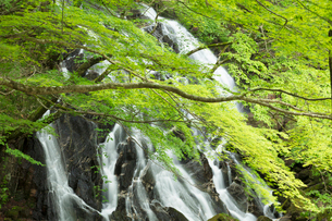 新緑の江竜田の滝の写真素材 [FYI04087071]