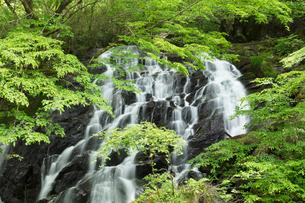 新緑の江竜田の滝の写真素材 [FYI04087072]
