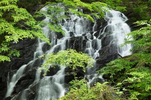 新緑の江竜田の滝の写真素材 [FYI04087073]