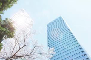 高層ビルと桜の写真素材 [FYI04087241]