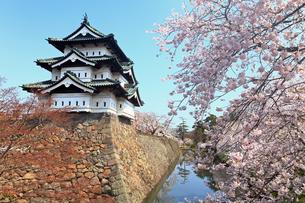 5月 桜の弘前城 -東北の春-の写真素材 [FYI04087627]