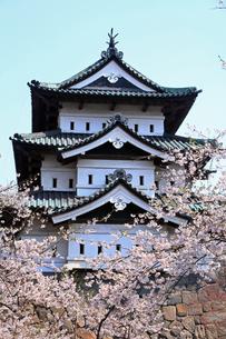 5月 桜の弘前城 -東北の春-の写真素材 [FYI04087631]