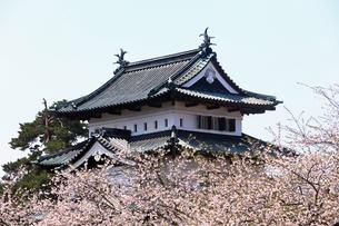 5月 桜の弘前城 -東北の春-の写真素材 [FYI04087632]