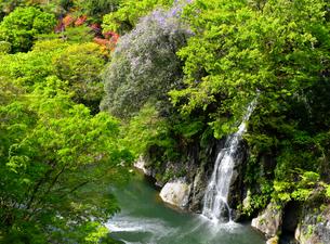 高津戸峡 新緑 ( 群馬県みどり市 )の写真素材 [FYI04087825]