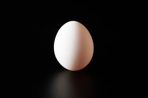 卵の写真素材 [FYI04088173]