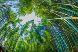 京都・嵐山の竹林の写真素材 [FYI04088588]