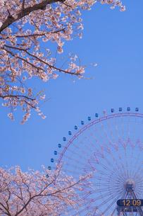 満開の桜と横浜みなとみらいの街並みの写真素材 [FYI04088623]
