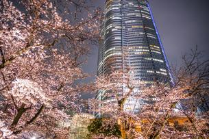 毛利庭園の夜桜と六本木ヒルズの写真素材 [FYI04088672]