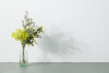 Bouquet in vase on white background. Modern lifestyle concept.の写真素材 [FYI04088996]