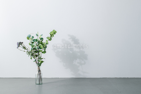 Bouquet in vase on white background. Modern lifestyle concept.の写真素材 [FYI04088997]