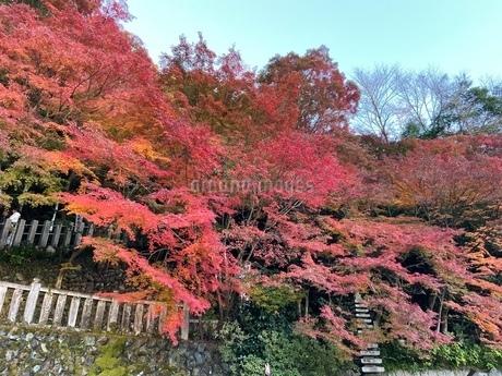 犬山寂光院の写真素材 [FYI04089036]