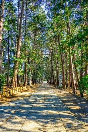 慶元寺参道、石畳と杉並木の道の写真素材 [FYI04089118]