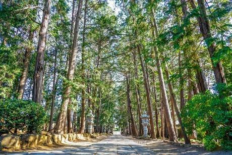 慶元寺参道、杉並木と石畳の道の写真素材 [FYI04089119]