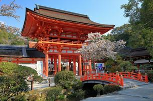 4月  桜の上賀茂神社 -楼門前-の写真素材 [FYI04089128]