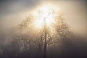 毛嵐の朝の写真素材 [FYI04089241]
