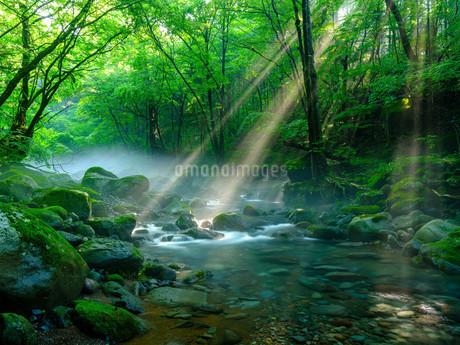 尚仁沢湧水の写真素材 [FYI04089297]