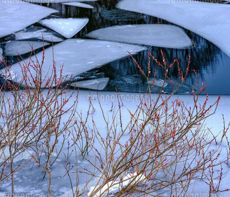 小野川湖に芽生えての写真素材 [FYI04089329]