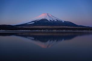 紅富士の写真素材 [FYI04089781]