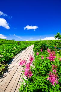 霧ヶ峰高原 草原の遊歩道と夏空の写真素材 [FYI04089804]