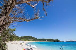 沖縄県座間味ビーチの写真素材 [FYI04089828]