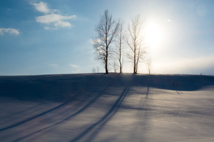 丘の上の冬木立と雪の上の影の写真素材 [FYI04089967]