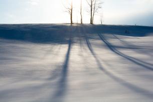 雪の斜面の冬木立の影の写真素材 [FYI04089968]