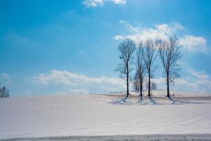 雪の畑と冬木立の写真素材 [FYI04089969]