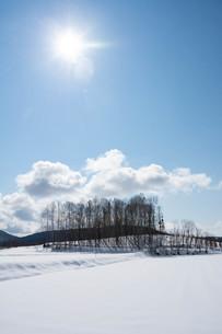 雪原と雑木林の写真素材 [FYI04089974]