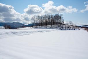 雪原と雑木林の写真素材 [FYI04089975]