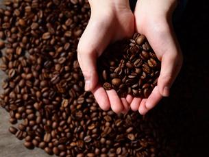 コーヒー豆の写真素材 [FYI04090052]