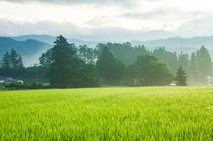 朝の里山青田の風景の写真素材 [FYI04090077]