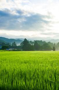 朝露輝く田園風景の写真素材 [FYI04090290]