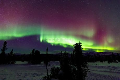 アラスカ フェアバンクスのチェナ山頂から観たオーロラの写真素材 [FYI04090544]