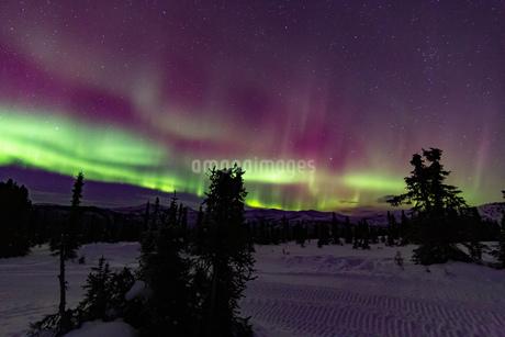 アラスカ フェアバンクスのチェナ山頂から観たオーロラの写真素材 [FYI04090545]