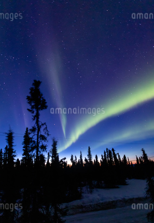アラスカ フェアバンクスの薄暮に現れた春のオーロラの写真素材 [FYI04090546]