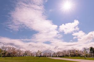 北海道 石狩市戸田記念公園の桜と太陽の写真素材 [FYI04090653]