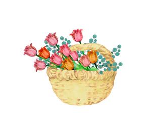 チューリップの花籠のイラスト素材 [FYI04090664]