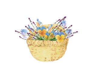 パンジーとラベンダーの花籠のイラスト素材 [FYI04090678]