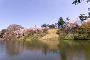 青森県 弘前公園の満開の桜の写真素材 [FYI04090704]