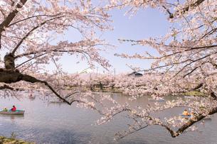 青森県 弘前公園の満開の桜の写真素材 [FYI04090705]