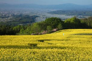 菜の花畑の写真素材 [FYI04090715]