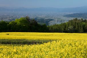 菜の花畑の写真素材 [FYI04090717]