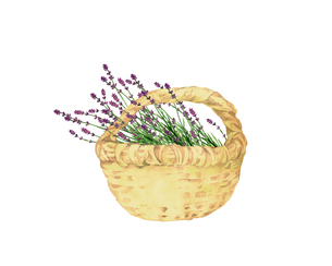ラベンダーの花籠のイラスト素材 [FYI04090746]
