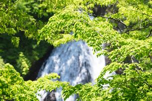 新緑の七ツ滝の写真素材 [FYI04090778]
