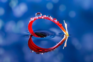 水に浮かぶ花としずくの写真素材 [FYI04091053]