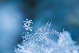 雪の結晶の写真素材 [FYI04091064]