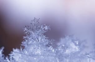 雪の結晶の写真素材 [FYI04091090]